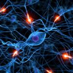 imagen neurona 225px